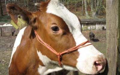 06 koe